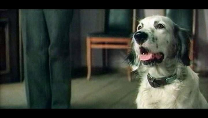 О грустных фильмах про животных (2)