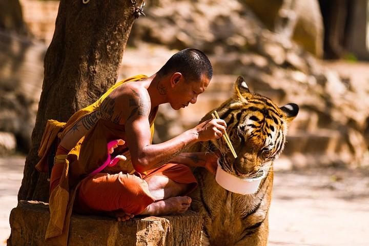 Храм тигров или монастырь в Тайланде (6)