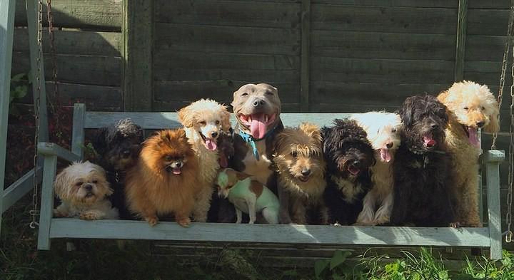 41 собака в доме, как вам? (3)
