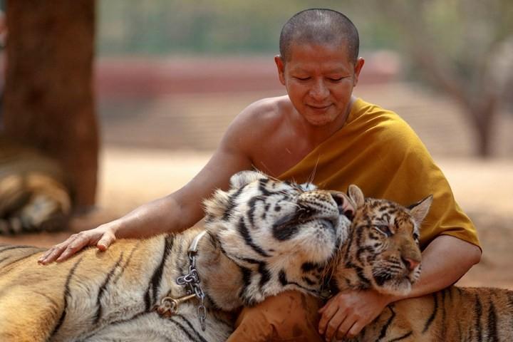 Храм тигров или монастырь в Тайланде (5)