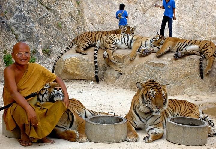 Храм тигров или монастырь в Тайланде (3)