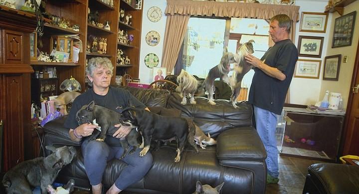 41 собака в доме, как вам? (6)