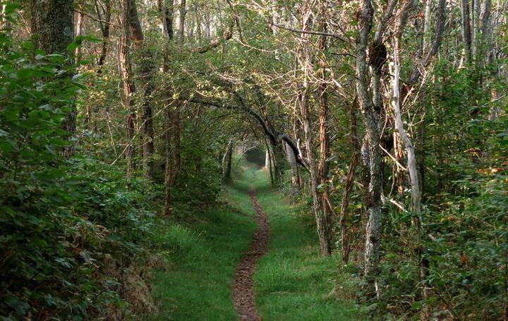 Как сбросить вес или прогулка по Аппалачской тропе (9)