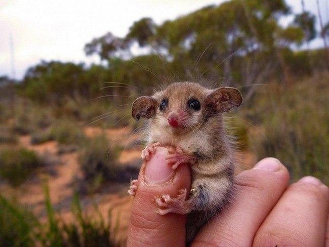 Не все животные в Австралии хотят вас убить
