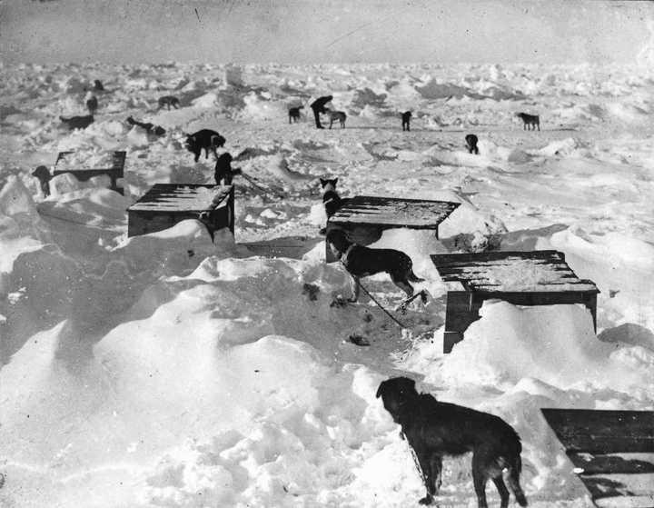«Эндьюранс», или История выживания 28 человек среди льдов Антарктики (32)