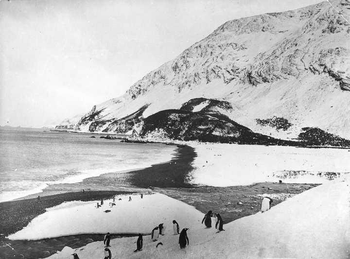 «Эндьюранс», или История выживания 28 человек среди льдов Антарктики (46)