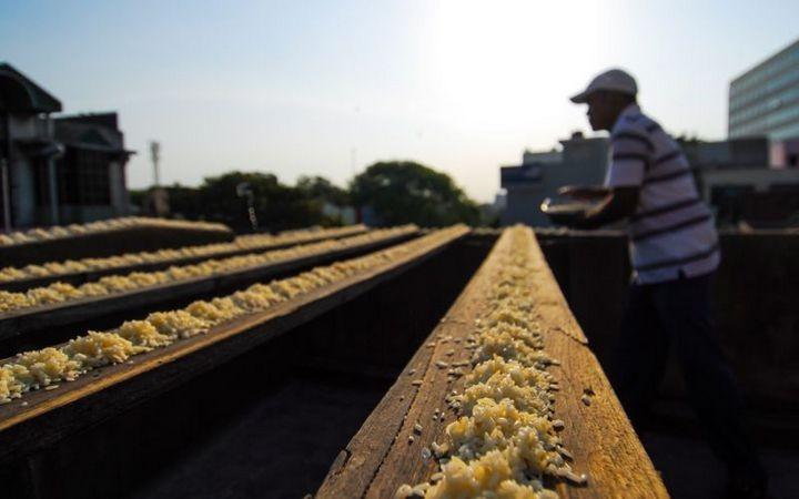 Индиец 10 лет кормит тысячи попугаев (3)