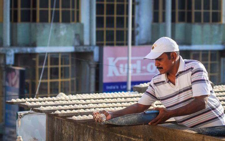 Индиец 10 лет кормит тысячи попугаев (6)