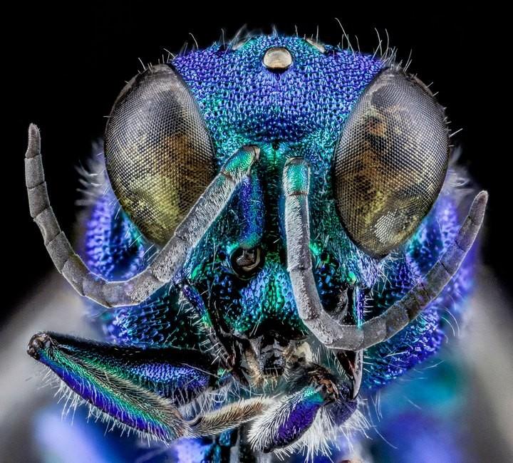 25 лучших макро-фотографий насекомых (1)