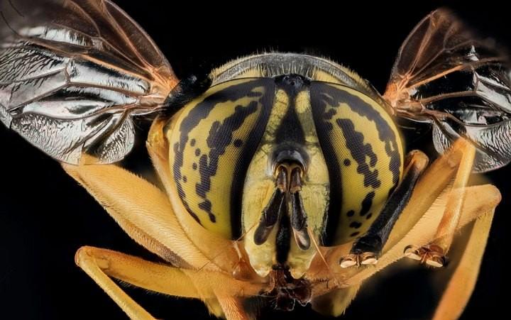 25 лучших макро-фотографий насекомых (3)