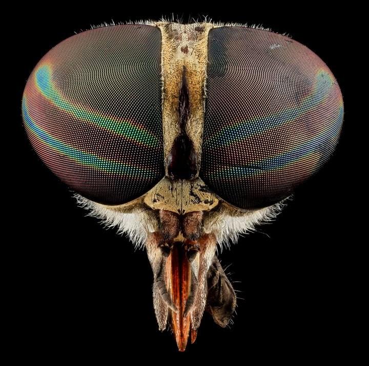 25 лучших макро-фотографий насекомых (6)