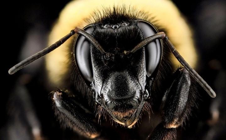 25 лучших макро-фотографий насекомых (8)