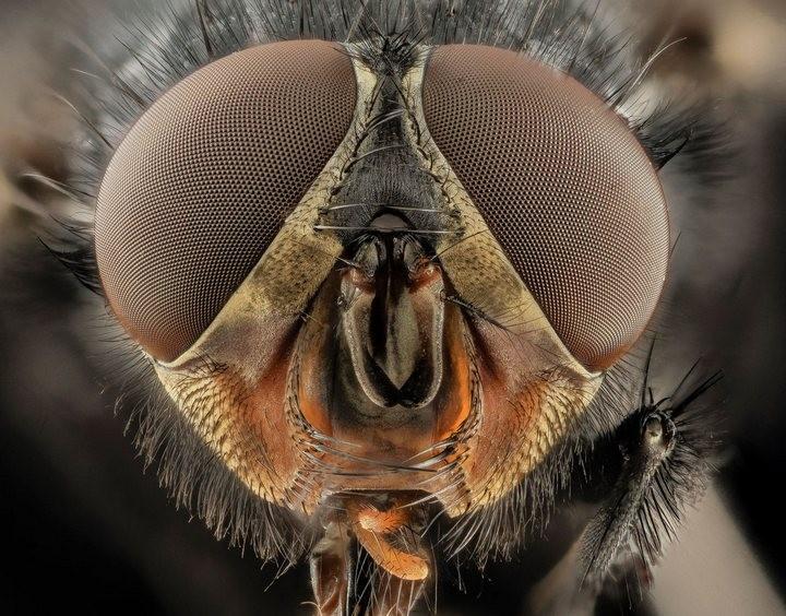 25 лучших макро-фотографий насекомых (9)