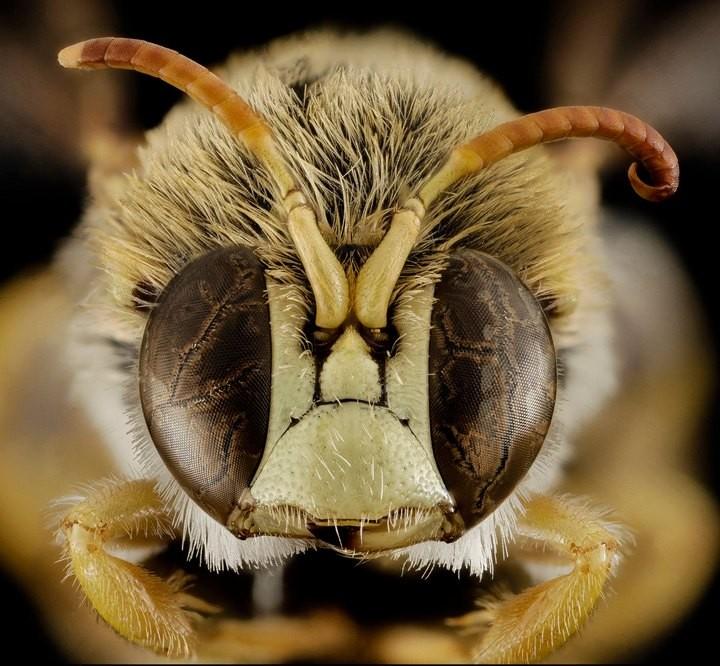 25 лучших макро-фотографий насекомых (10)