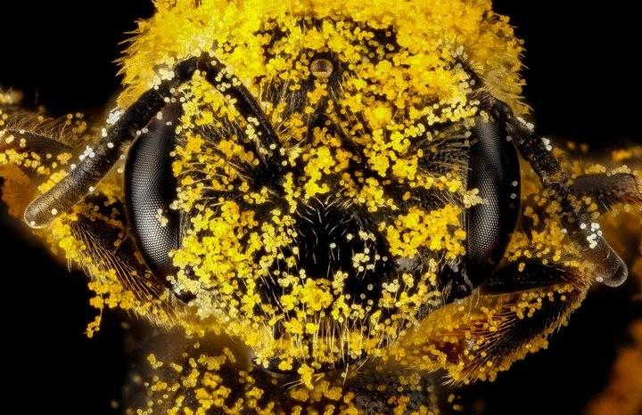 25 лучших макро-фотографий насекомых (12)