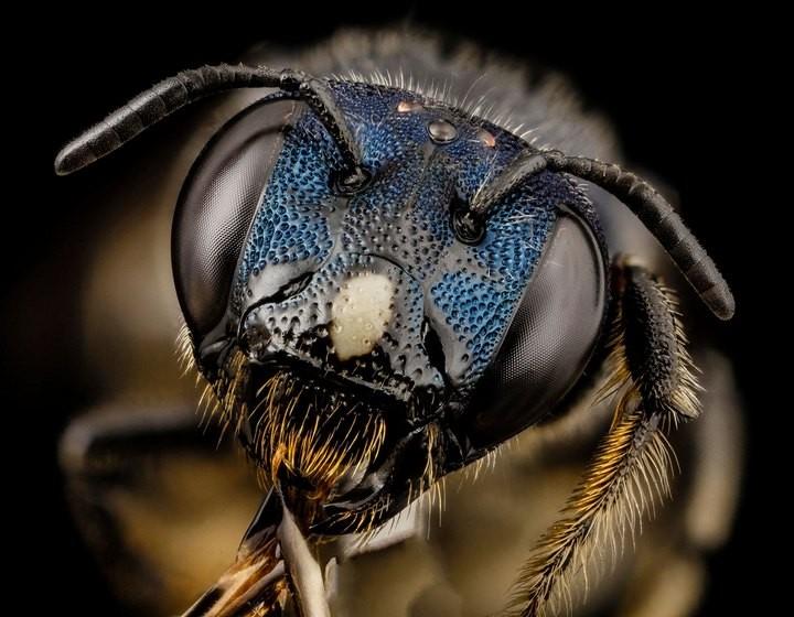 25 лучших макро-фотографий насекомых (14)