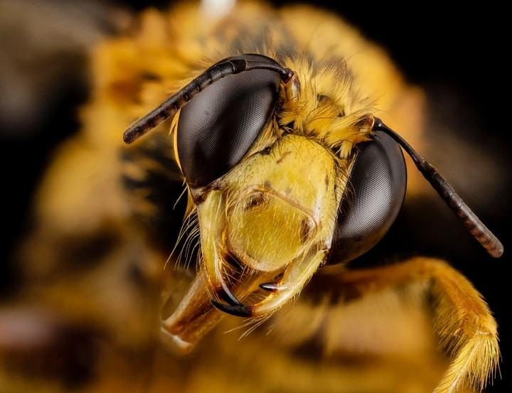 25 лучших макро-фотографий насекомых (15)