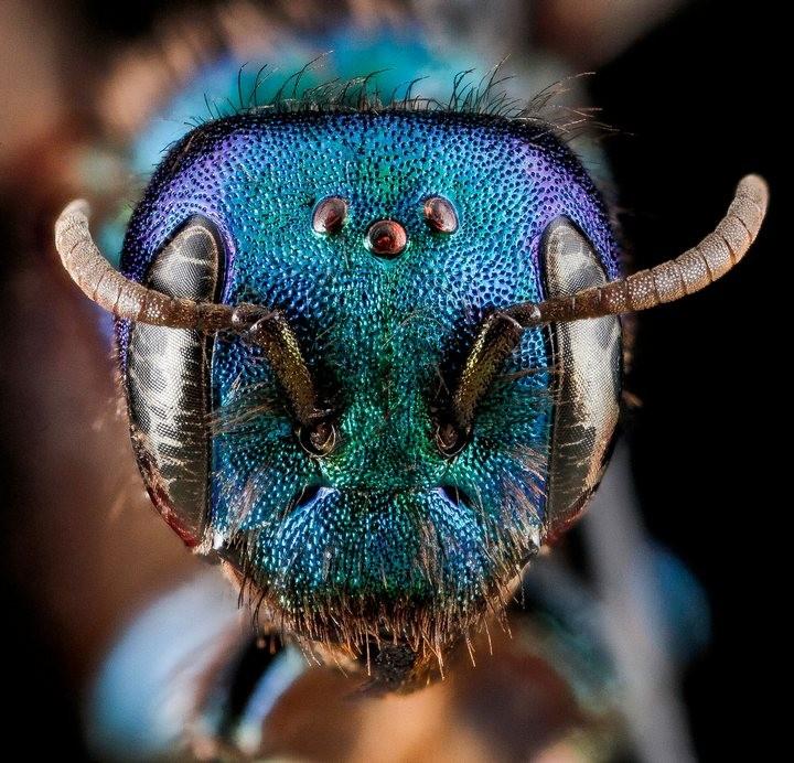 25 лучших макро-фотографий насекомых (19)