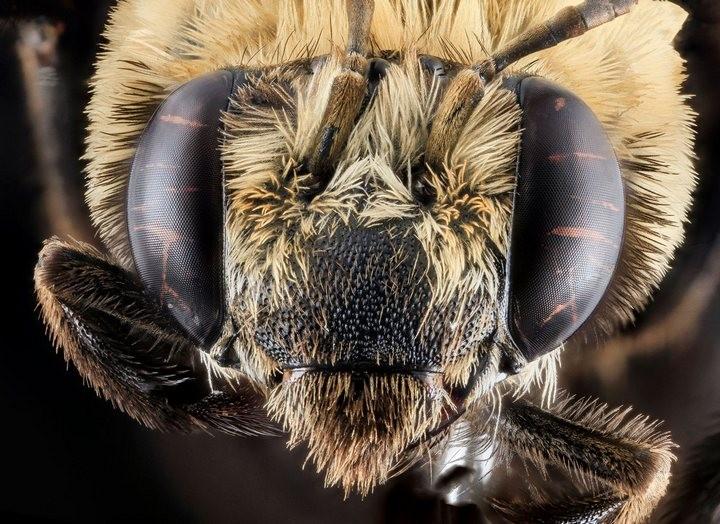 25 лучших макро-фотографий насекомых (20)