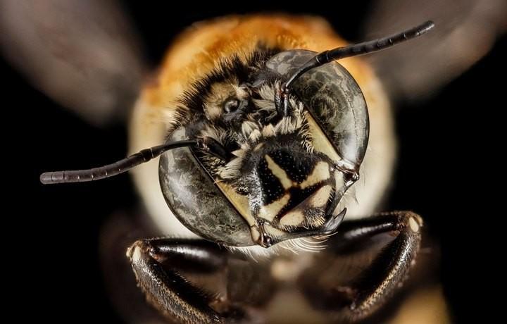 25 лучших макро-фотографий насекомых (21)