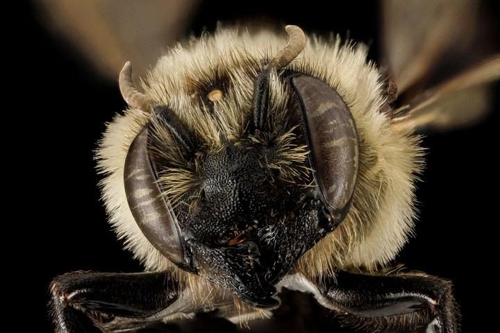 25 лучших макро-фотографий насекомых (22)