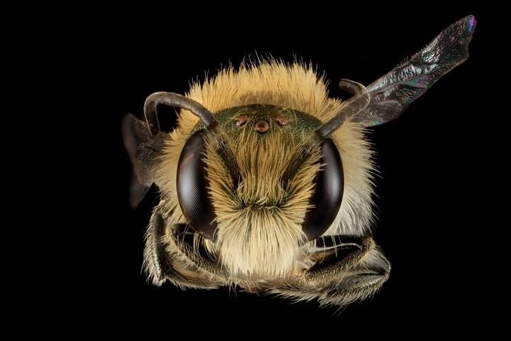 25 лучших макро-фотографий насекомых (24)