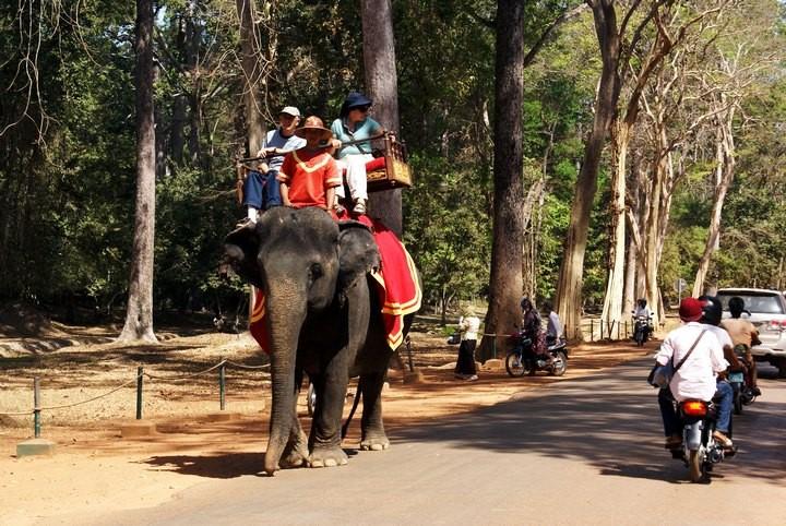 Интересные факты о Камбодже (9)