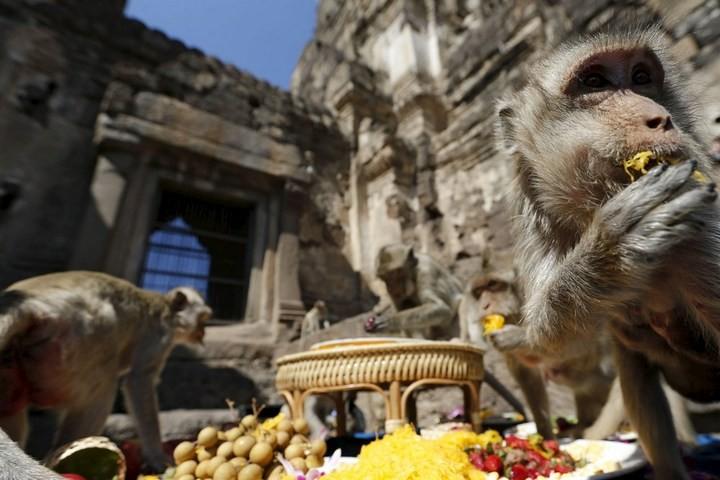 Фестиваль обезьян в Таиланде (1)