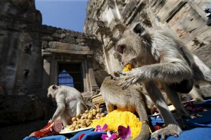 Фестиваль обезьян в Таиланде (3)