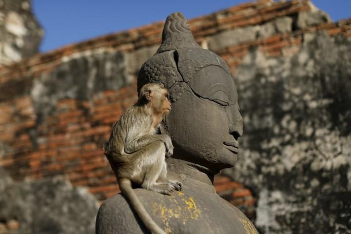 Фестиваль обезьян в Таиланде (5)
