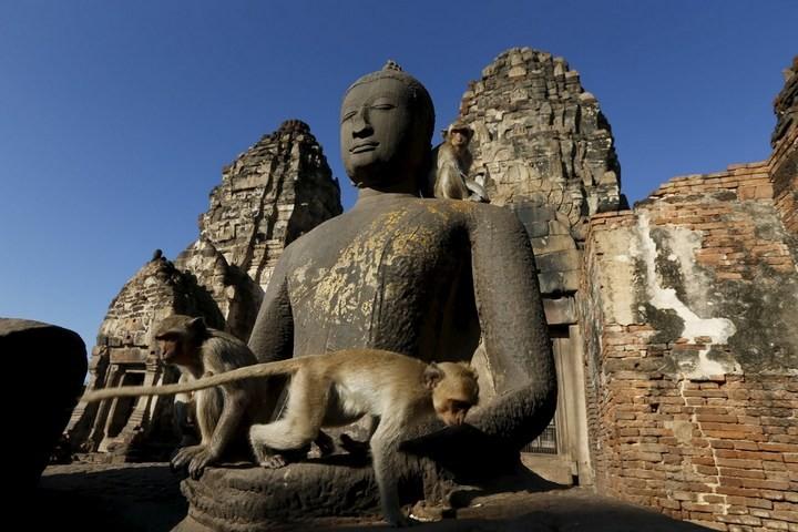 Фестиваль обезьян в Таиланде (6)