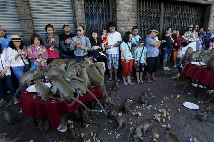 Фестиваль обезьян в Таиланде (9)