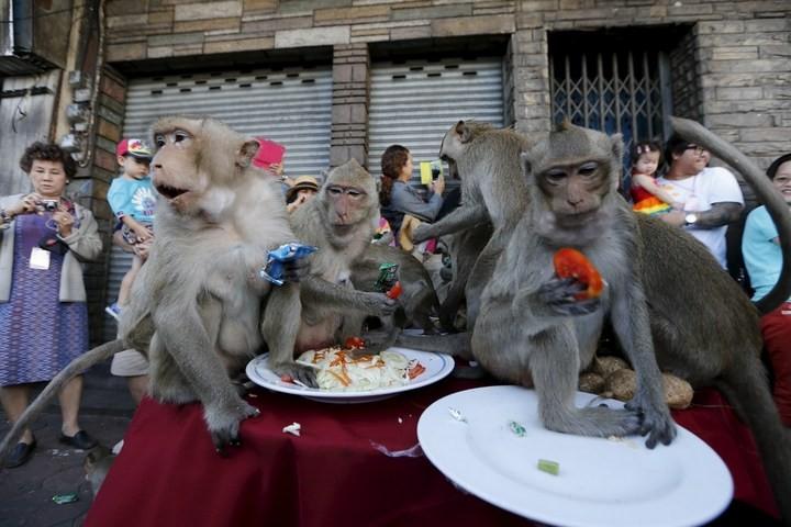Фестиваль обезьян в Таиланде (12)