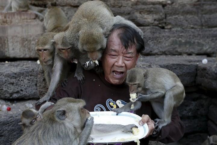 Фестиваль обезьян в Таиланде (13)