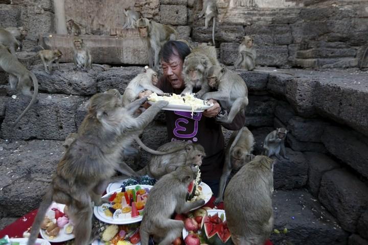 Фестиваль обезьян в Таиланде (14)