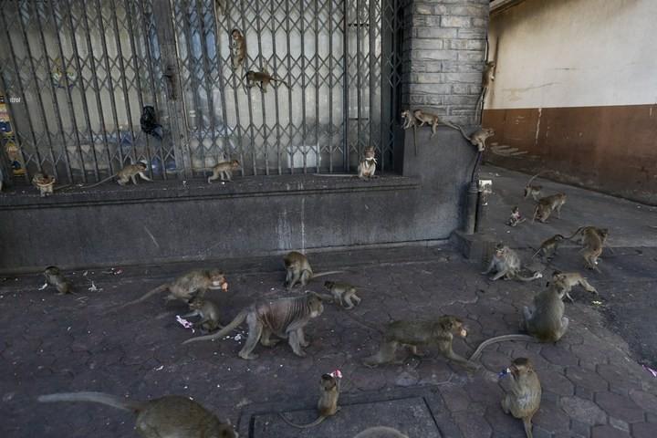Фестиваль обезьян в Таиланде (15)