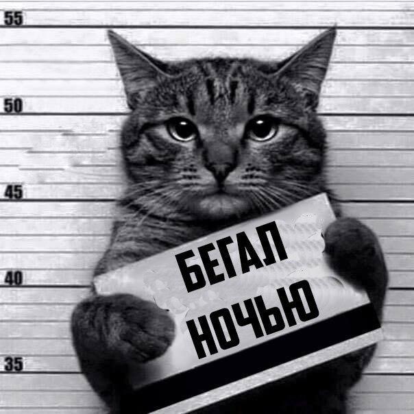 Кот-рецидивист (8)
