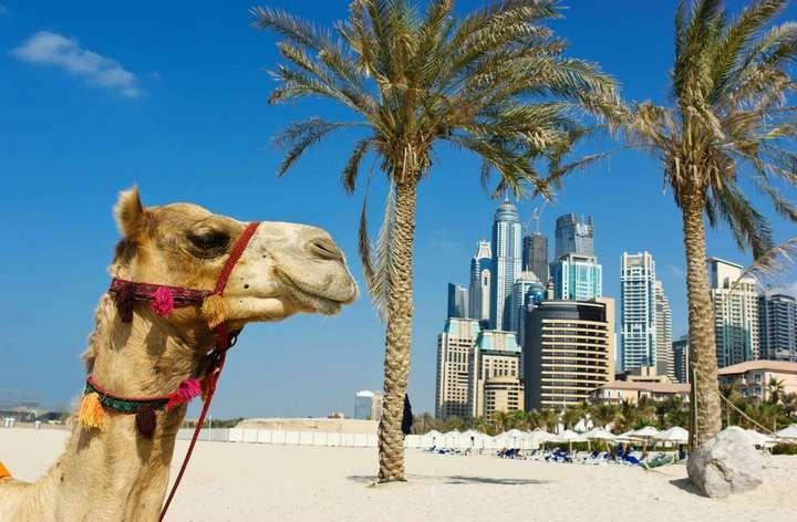 ОАЭ. Интересные факты о Дубае (2)