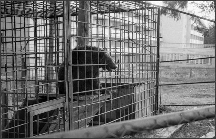 """Непарадные фотографии """"Великого и Могучего"""" от Владимира Соколаева (2)"""
