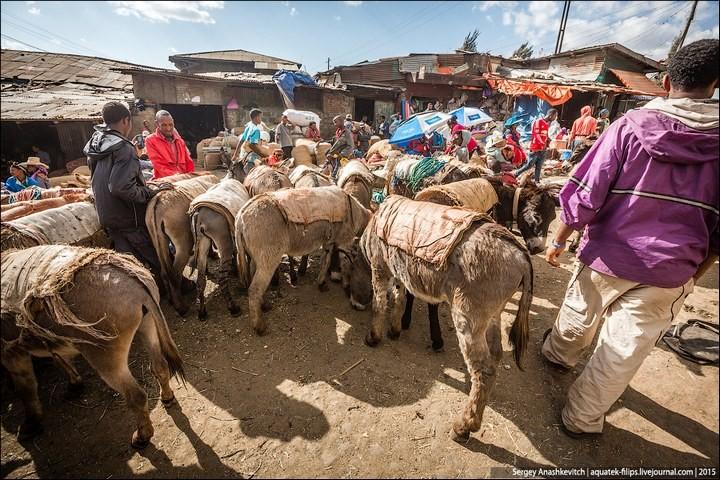 Африканский рынок отбросов (31)