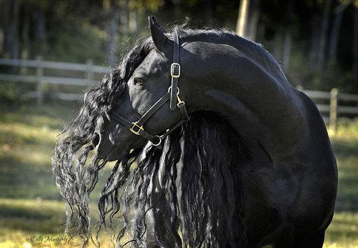 Фредерик Великий — самая красивая лошадь в мире (3)