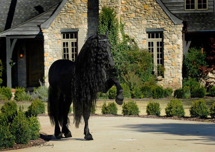 Фредерик Великий — самая красивая лошадь в мире (4)