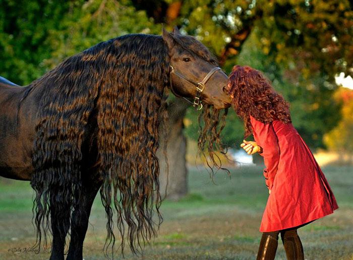 Фредерик Великий — самая красивая лошадь в мире (6)