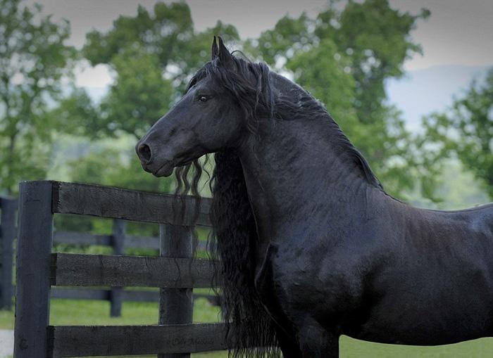 Фредерик Великий — самая красивая лошадь в мире (7)