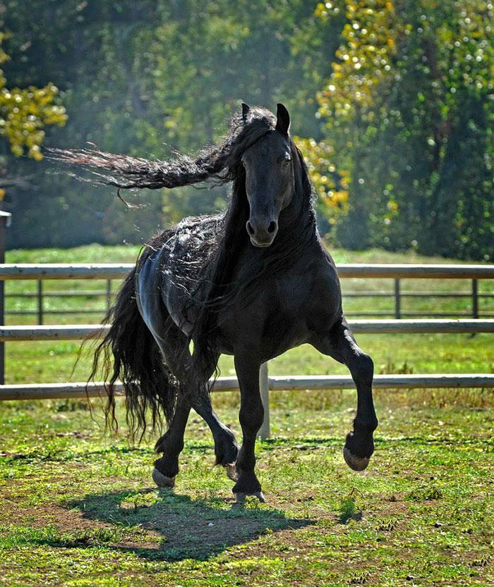 Фредерик Великий — самая красивая лошадь в мире (10)