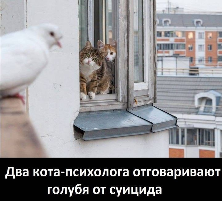 Фотомиг