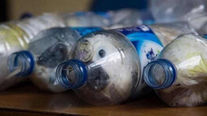 Контрабанда попугаев в пластиковых бутылках (1)