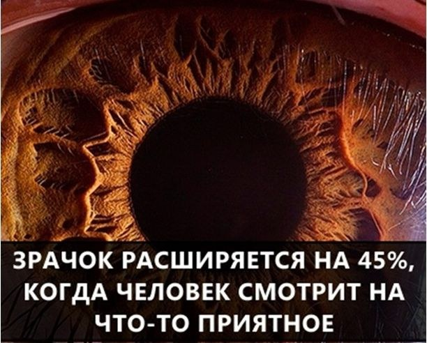 О самых интересных фактах в мире (17)