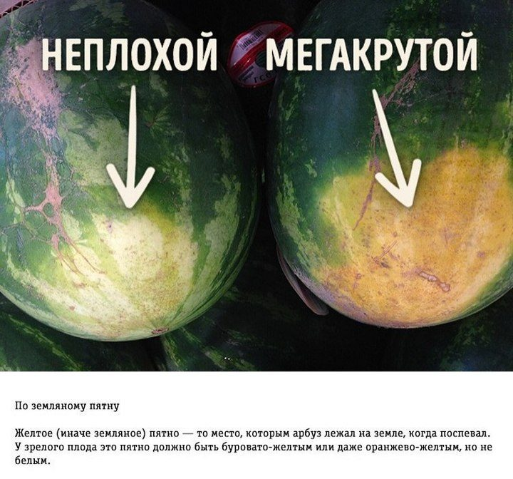 Как правильно выбирать арбуз (1)