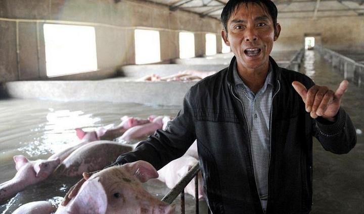 Фермер из Китая вынужден оставить умирать 6000 своих свиней из-за наводнения (2)